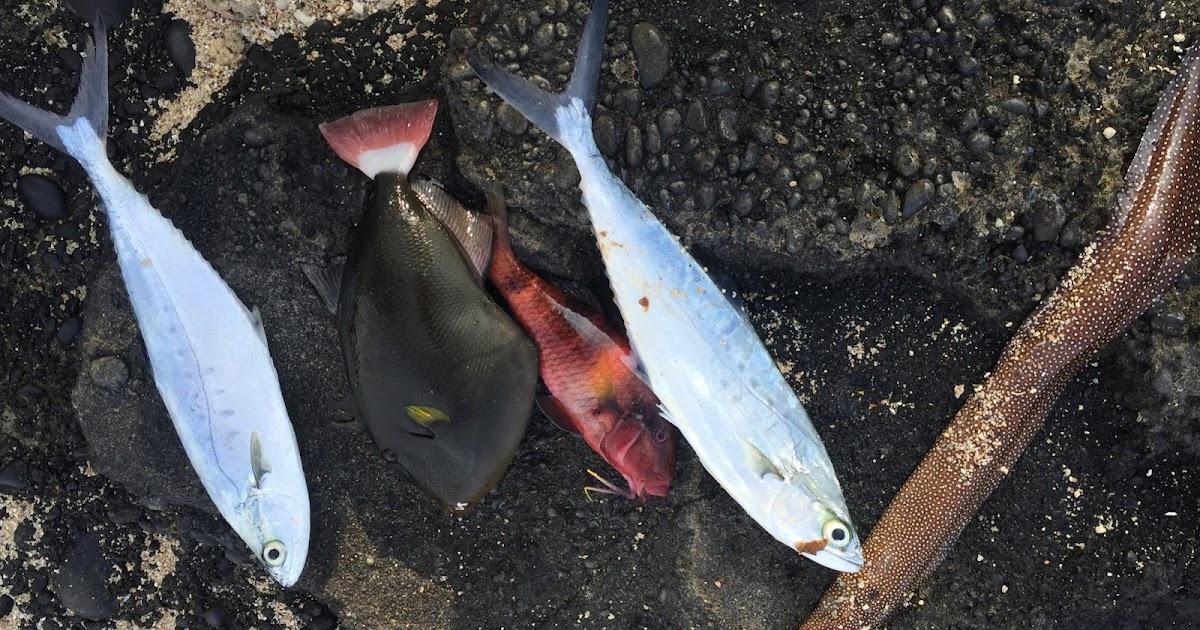 Puyallup river fishing report tropics success for Puyallup river fishing