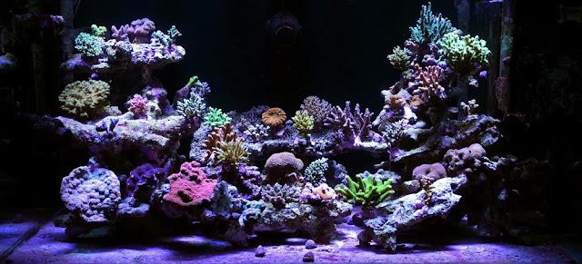Aquarium Air Laut - Budidaya Ikan