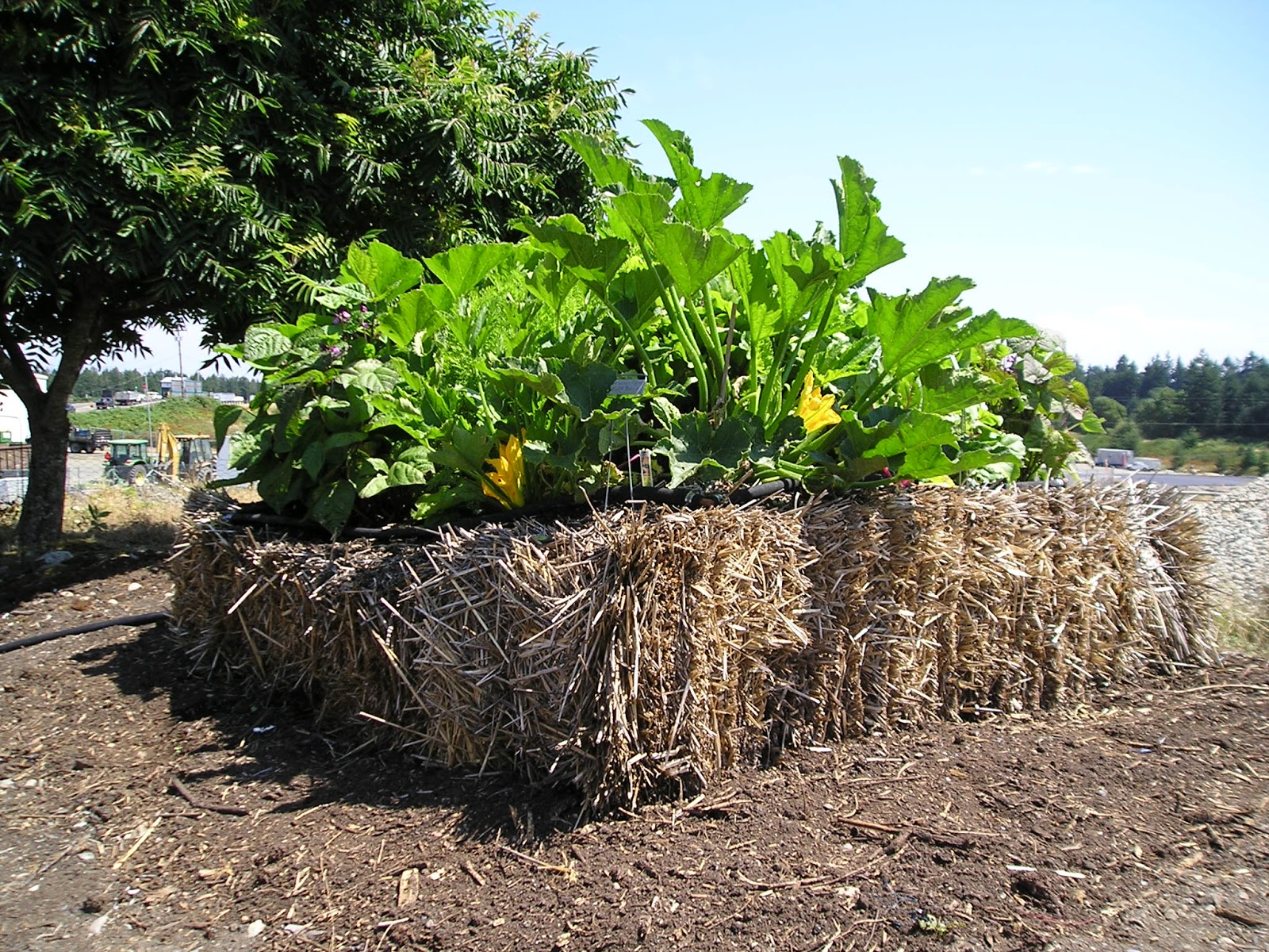 Two Sisters Gardening Have You Tried Straw Bale Gardening