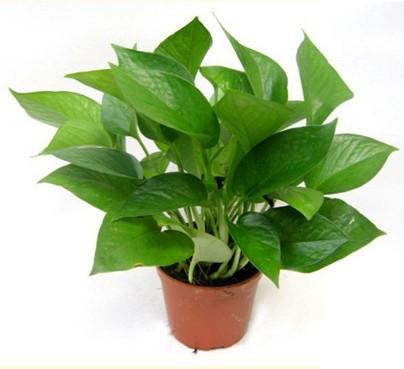 Las 7 mejores plantas de interior plantas - Plantas para salon ...