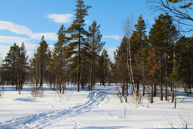 Ofelas Moose Safari Path Outdoor Winter Activities in Sweden's Lapland