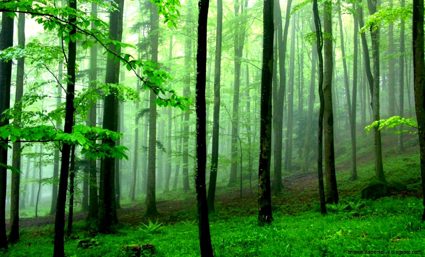 Forest Wallpaper Hd 1080P