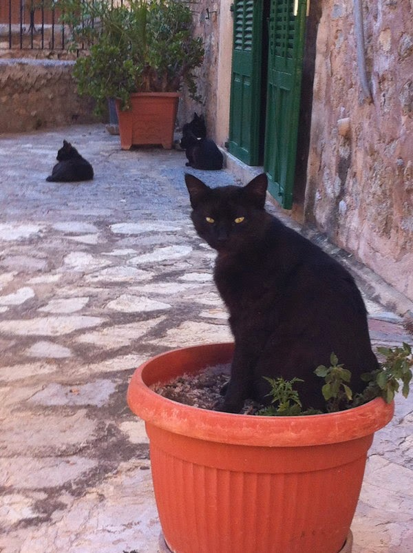 cats of deia mallorca
