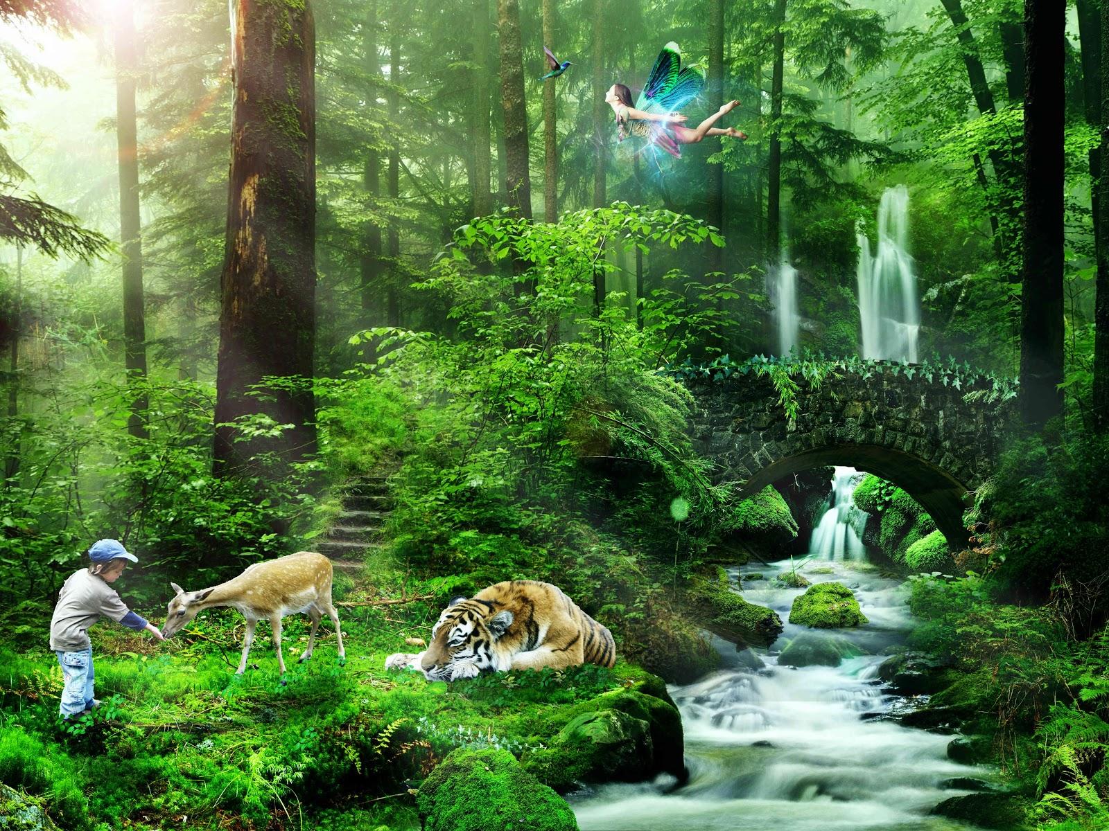 とても清々しい森の幻想的な様子