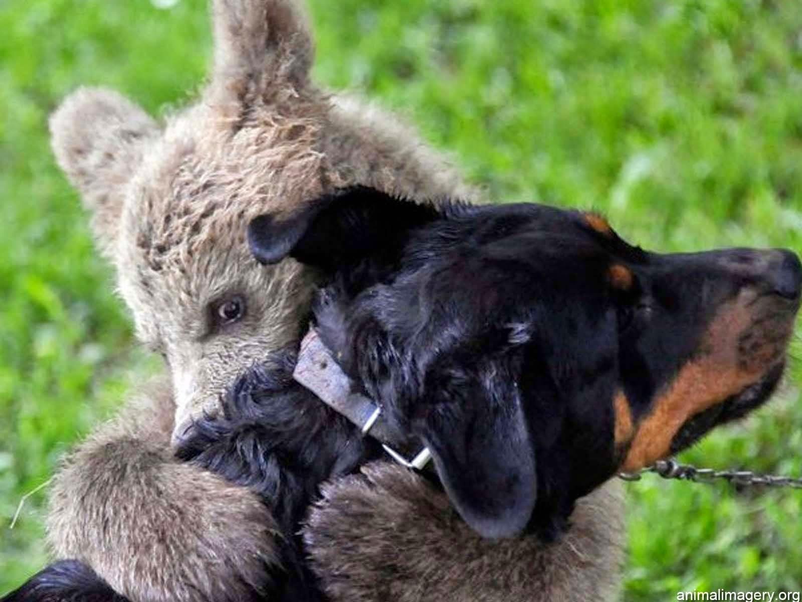 Animals Hugging HD Wallpapers (14 Cute Animals Hugs