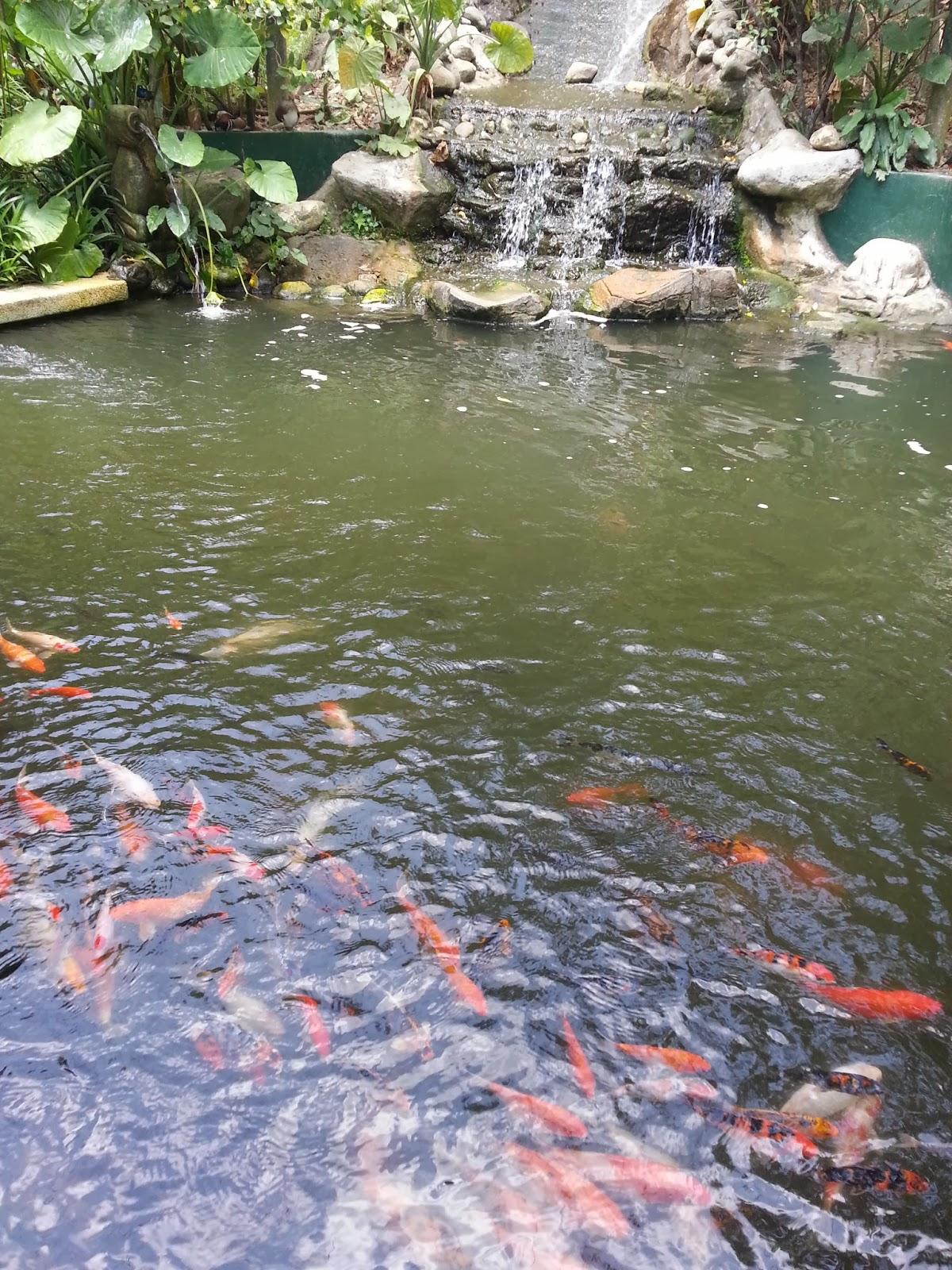 Jalanjalan kl bird park kuala lumpur for Koi pool opening times