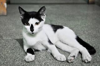 Hadits Palsu Tentang Kucing Rasulullah