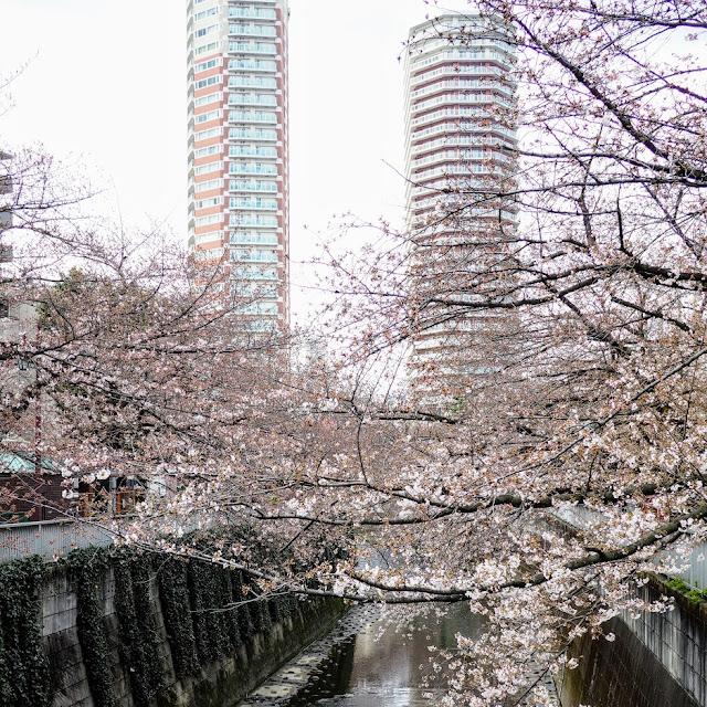 神田川 東中野