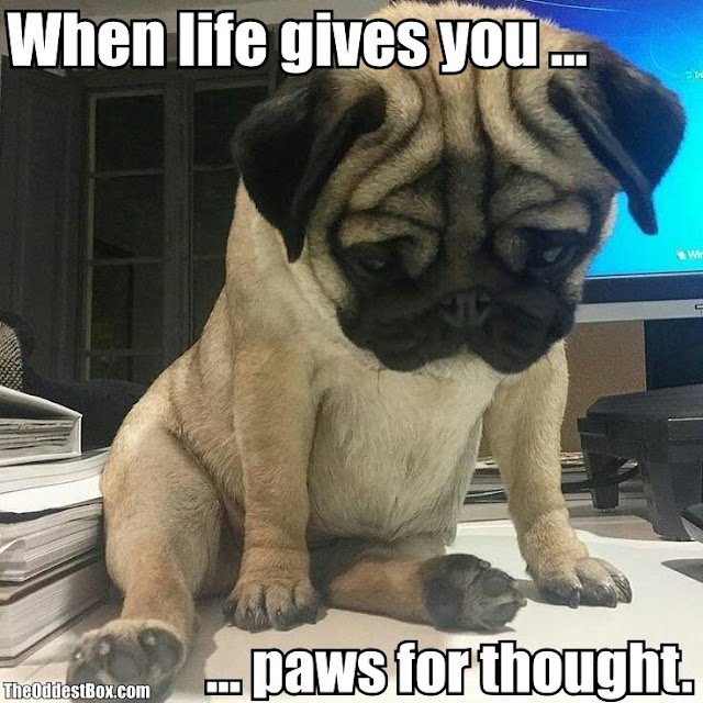 Funny paws for thought dog meme picture