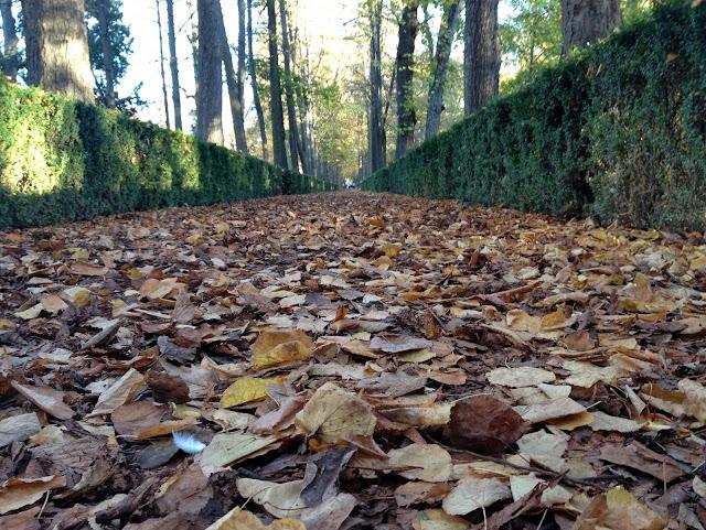 El otoño en aranjuez