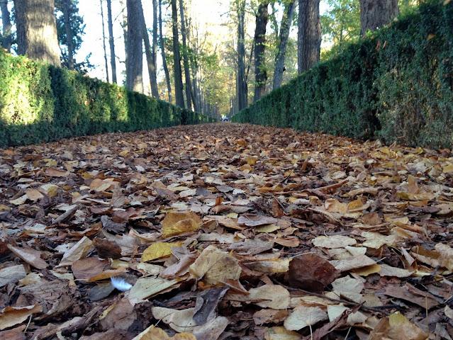 El otoño en los jardines del Palacio de Aranjuez