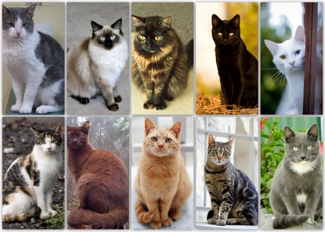 Gambar Kucing Berwarna godean.web.id