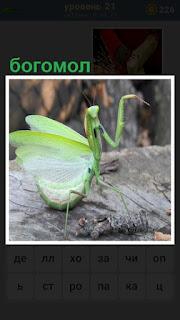 на поверхности земли сидит богомол зеленого цвета