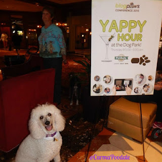 Carma Poodale, white poodle next to the Yappy Hour sign