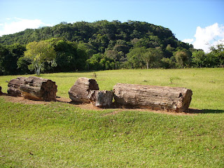 como identificar madeira petrificada