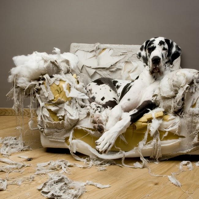 Historia udomowienia psów