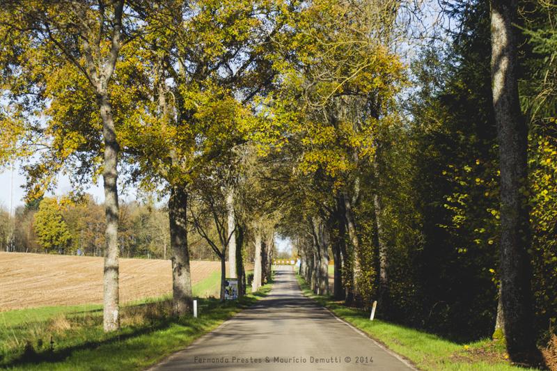 copa de árvores na estrada