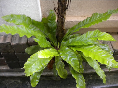 Hasil carian imej untuk pokok bunga langsuir