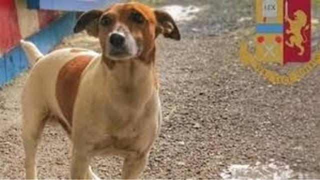 Η ιταλική μαφία επικήρυξε με €5.000 αστυνομικό σκυλί K9 γιατί ανακάλυψε πάνω από 2 τόνους ναρκωτικών