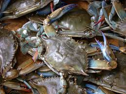 Keluarnya peraturan Menteri tentang pelarangan penangkapan kepiting bertelur. Secara otomatis mempengaruhi nilai jual kepiting betina terutama kualitas ekspor, hal ini tentunya juga sangat dirasakan oleh pembudidaya. Namun demikian, tidak membuat pelaku utama pembesaran kepiting bakau untuk menyerah karena kepiting jantang dengan kualitas dan ukuran eksport yang di anjurkan justru mengalami kenaikan harga yang cukup.  Permintaan eksport tidak pernah tercukupi dari hasil produksi budidaya, berati peluang pasar cukup menjanjikan. Tantanagan yang dihadapai pembudidaya adalah bagaimana memproduksi kepiting bakau jantan dengan ukuran dan kualitas yang sesuai dengan standar kepiting yang diperbolehkan untuk ditangkap. Hal ini diperlukan karena sangat susah dibedakan hasil tangkapan di alam dan hasil pembesaran di tambak.