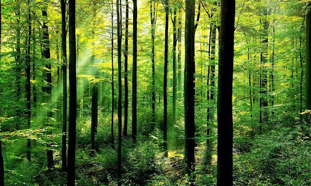 10 Cara Melestarikan Sumber Daya Alam