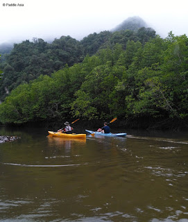 Sea kayaking in Krabi mangrove forests