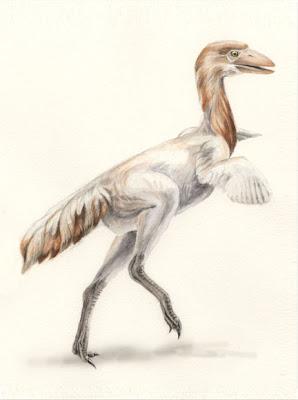 aves prehistoricas argentinas Patagopteryx