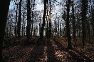 Bäume werfen Schatten auf den Waldboden