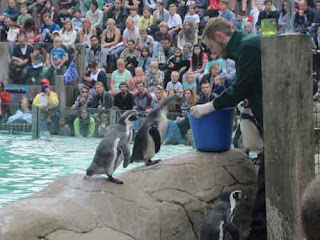 Feeding Time At Penguin Beach.