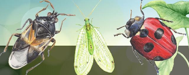 Mos i vrisni kurrë këto Insekte në Kopështin tuaj, për prodhime 'Bio' të sigurta