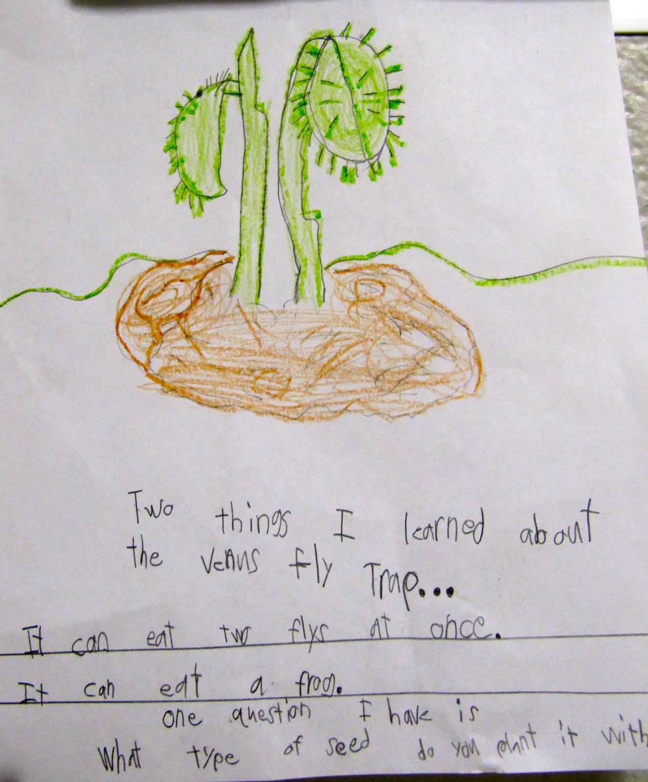 Mrs Samuelson S Swamp Frogs Plant Unit Ideas