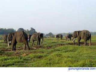 Taman Nasional Way Kambas Berada di Lampung