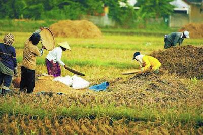 Peluang Usaha Pertanian Agribisnis