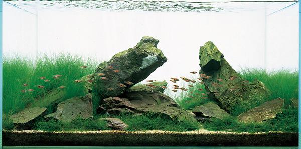 Gaya Dasar Pada Aquascape