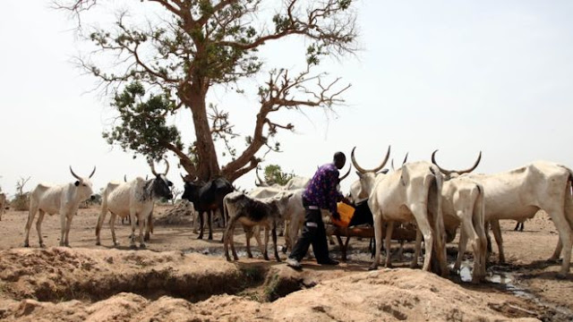 The Fulani herdsman travel vast distances tending their cattle