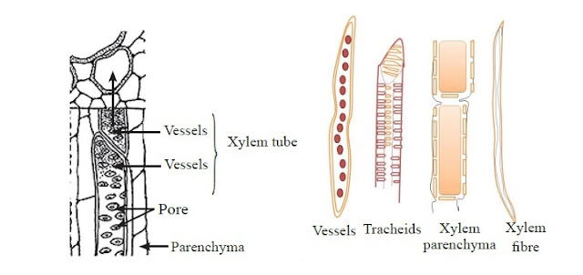 Plant tissues-Living tissues - science lessons for life