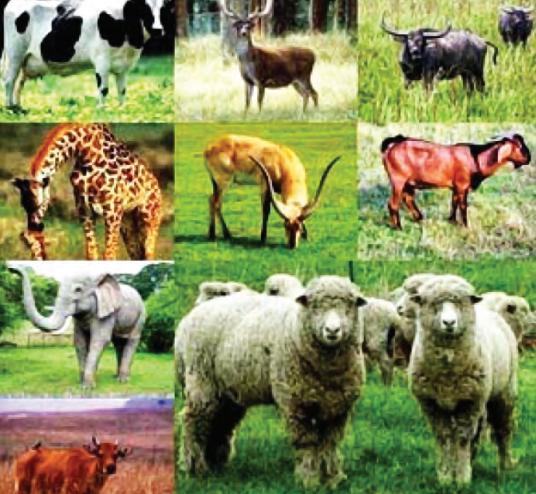 410 Koleksi Gambar Sistem Pernapasan Hewan Mamalia HD Terbaik