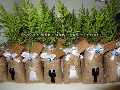 Nikah Çamı Fidesi İzmir 4