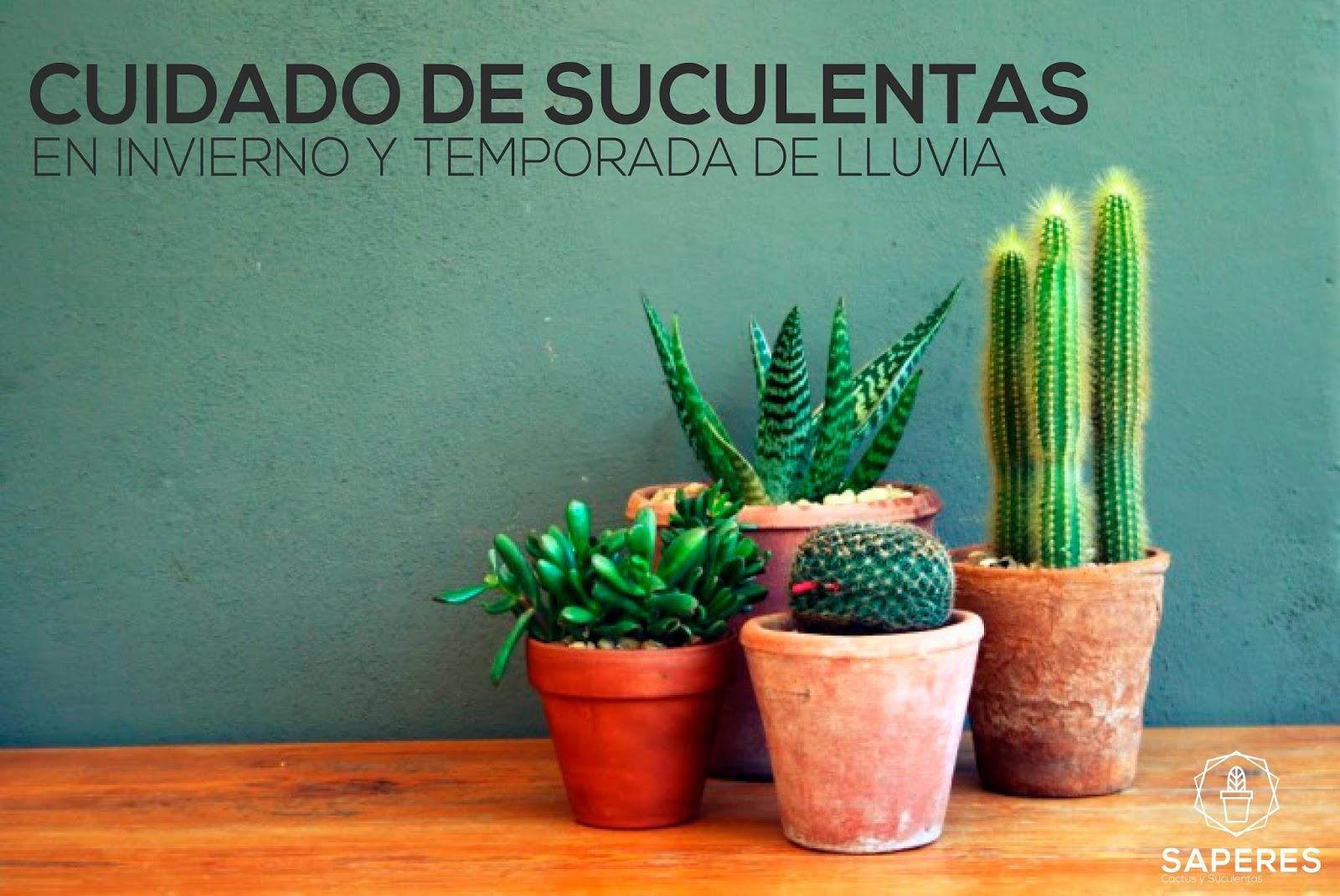 Cuidado de suculentas en invierno y temporada de lluvias - Cactus cuidados interior ...