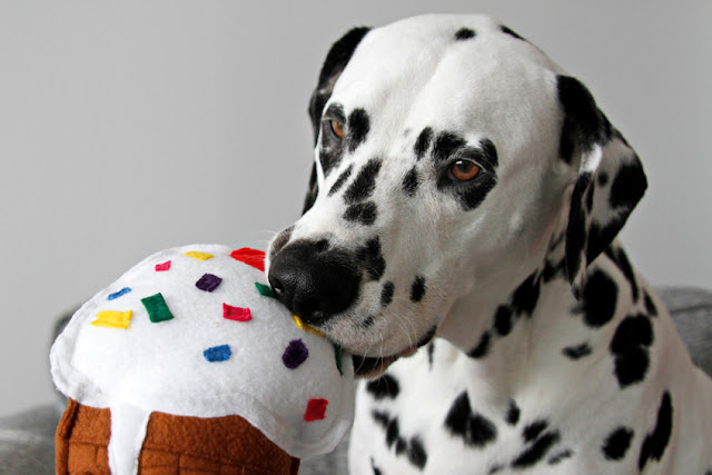 Dalmatian dog nibbling a homemade dog toy shaped like an ice cream cone
