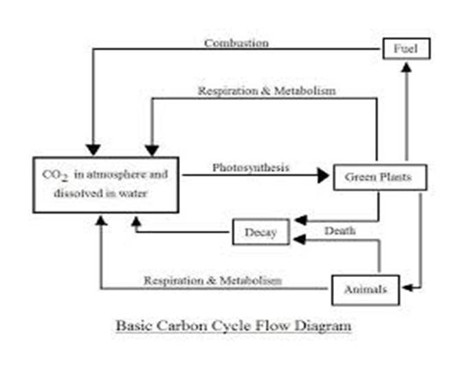 Carbon cycle flow chart images chart design for project carbon cycle flow chart gallery chart design for project ccuart Images