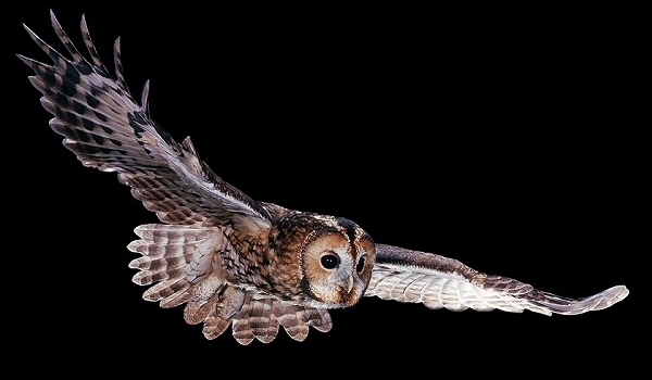 Snuff Mills Action Group blog: Owls on the prowl