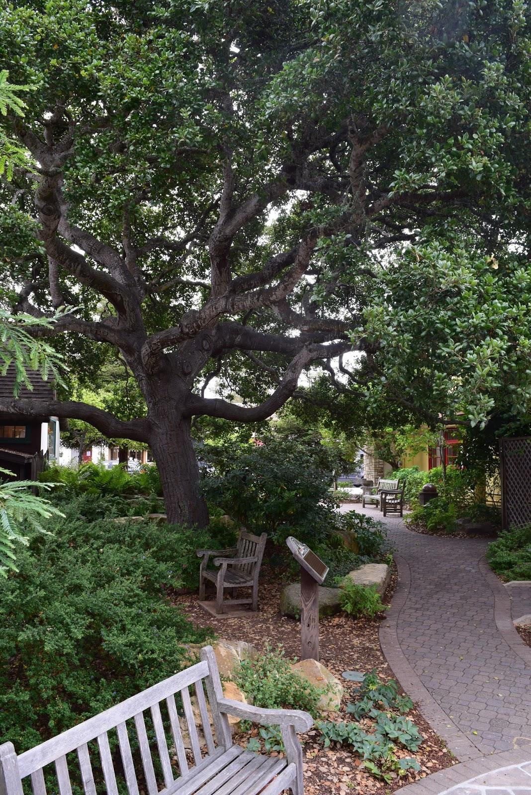 Friends Of Carmel Forest Tree Tour With Dr Matt Ritter