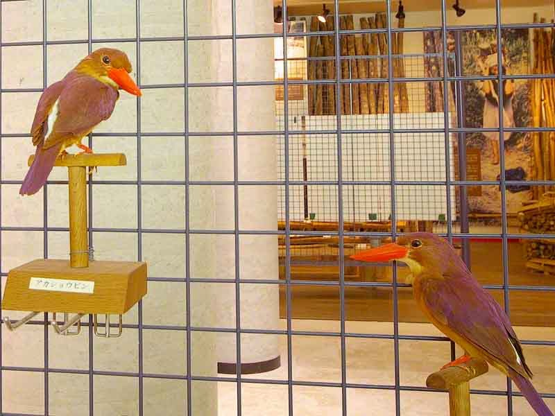 Two birds stuffed and mounted in museum