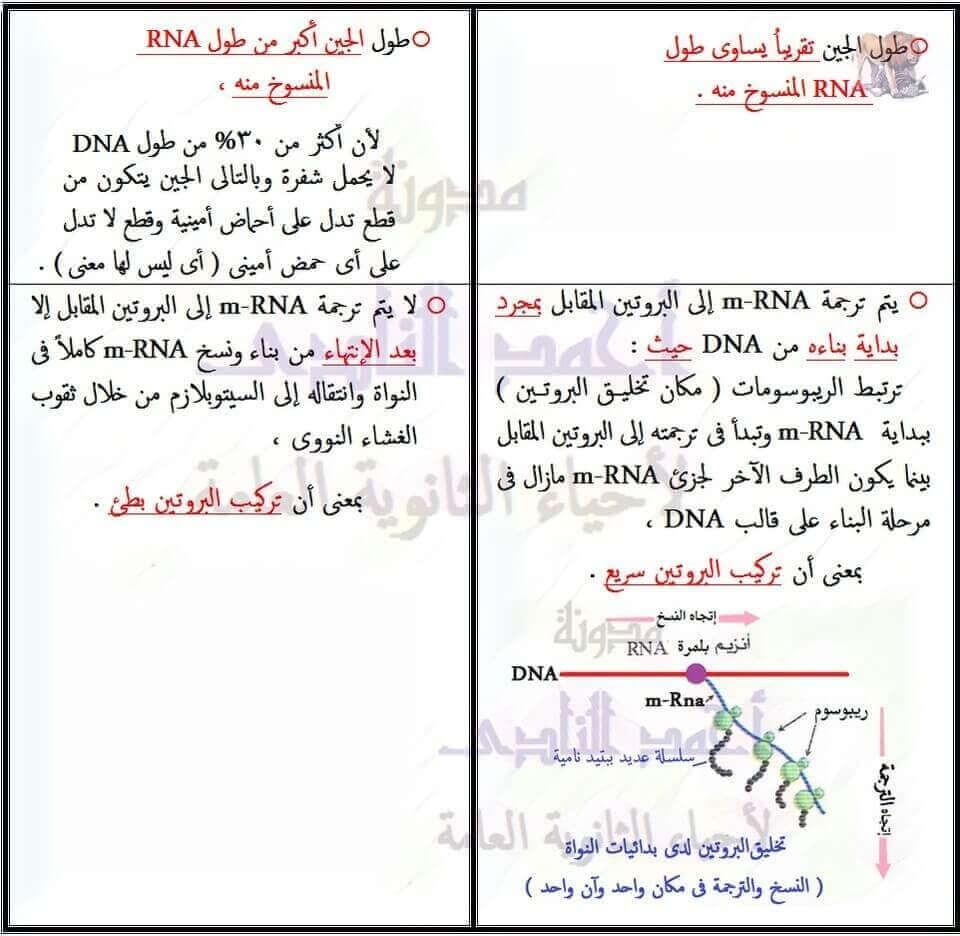 الفرق بين تضاعف DNA و نسخ m-RNA - الثالث الثانوى