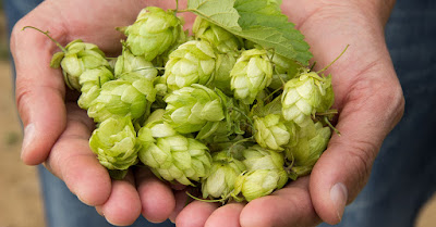 Image result for hops for health