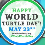 Happy World Turtle Day