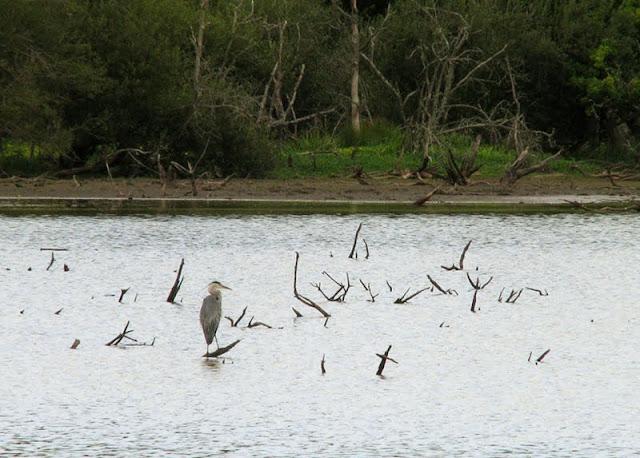 marais ornithologie bretagne sud