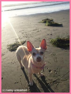 aoife at the beach