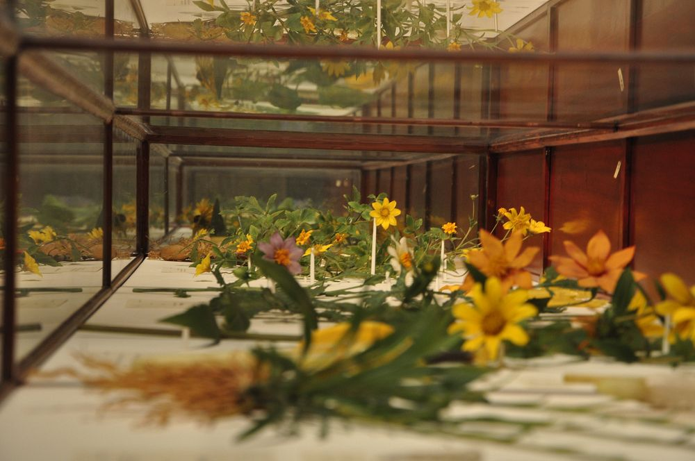 Glass flowers at the Harvard Museum of Natural History